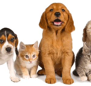 What You Need To Know About A Dog Friendly Drug Rehab
