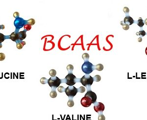 The Rundown of Branch Chain Amino Acids