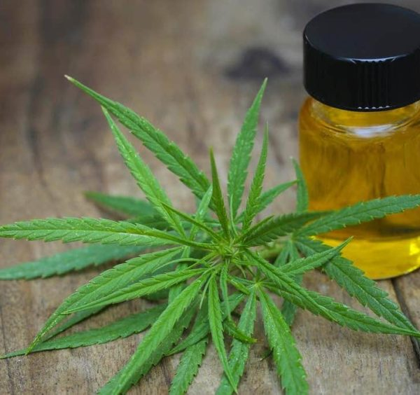 All You Need to Know Regarding CBD Oil