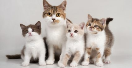 Keep Your Kitty Happy with These Tips