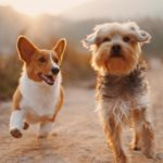A Dogs Communication – Could Your Dog be Trying to Tell You Something?