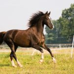 An Overview of Horse Insurance